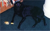 Miki at 2 years old.